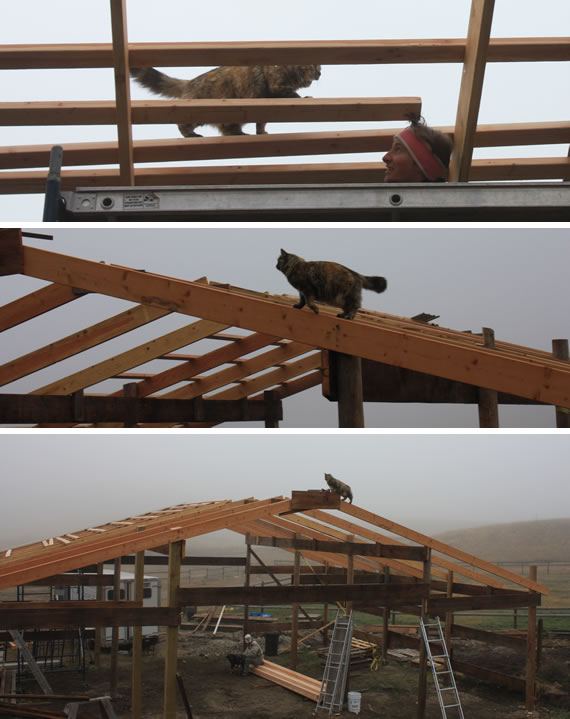 epic barn project rafter scabbing