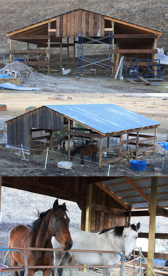 Epic Barn Project today with Horses