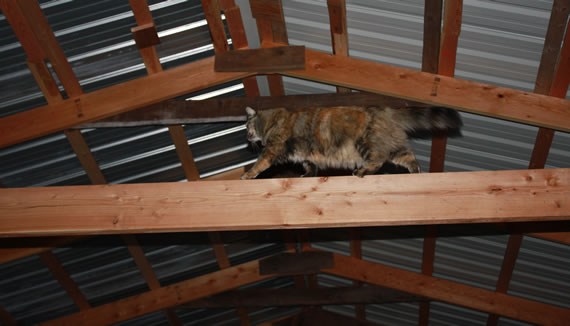 Mocha in the rafters