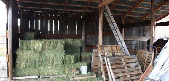 hay Epic Barn