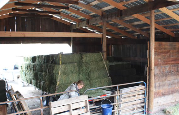 hay in the Epic Barn