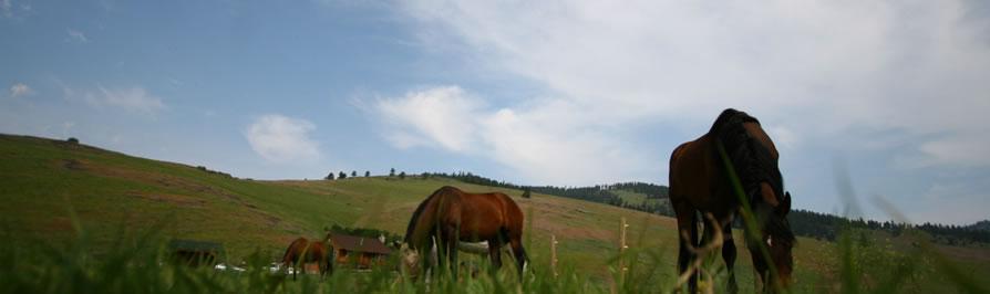 AshtonAnnas Horses