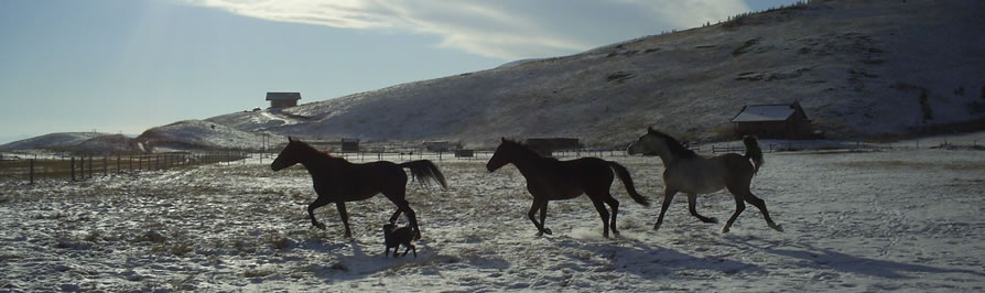 AshtonAnnas Horses running in the snow