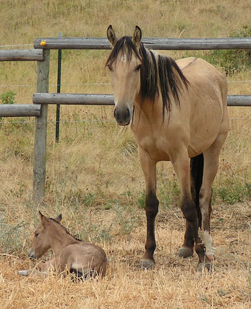 Baby Mustang Horses | galleryhip.com - The Hippest Galleries!