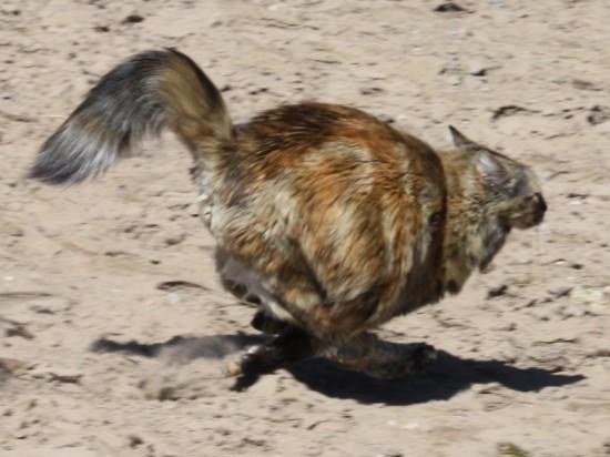 Mocha running